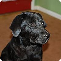Adopt A Pet :: Ellie - Albany, NY
