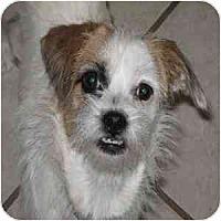 Adopt A Pet :: Mallory - Phoenix, AZ