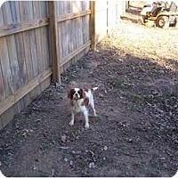 Adopt A Pet :: Freedom - Lexington, TN