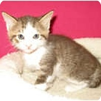 Adopt A Pet :: Reggie - Shelton, WA