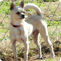 Adopt A Pet :: PEEWEE - North Augusta, SC