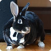 Adopt A Pet :: Velvet - Portland, ME