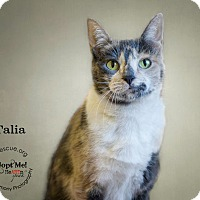 Adopt A Pet :: Talia - Phoenix, AZ
