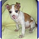 Adopt A Pet :: Victor (POM-CD)