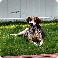 Adopt A Pet :: Tucker - Grafton, MA