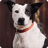 Adopt A Pet :: Clarabelle - Portland, OR