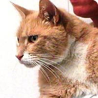 Adopt A Pet :: Jasper - Maynardville, TN