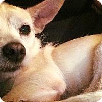 Adopt A Pet :: Ethel - Pitt Meadows, BC