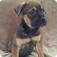 Adopt A Pet :: Buttons - Nashville, TN
