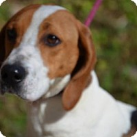 Adopt A Pet :: Gypsy - Doylestown, PA