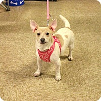 Adopt A Pet :: Ruby - Yuba City, CA