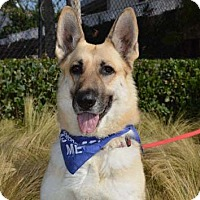 German Shepherd Dog Dog for adoption in Mira Loma, California - Jenny