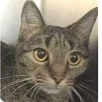 Adopt A Pet :: Phoebe - Springdale, AR