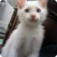 Adopt A Pet :: Frankie - Mission Viejo, CA