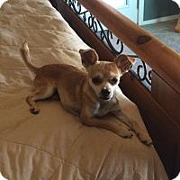Adopt A Pet :: Taz - Tucson, AZ