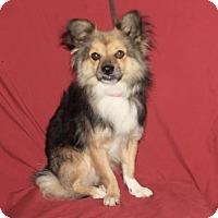 Adopt A Pet :: Marcel - Palo Alto, CA