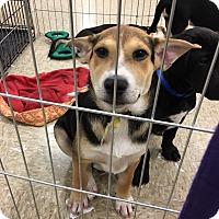 Adopt A Pet :: Pez - Hohenwald, TN