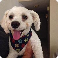 Adopt A Pet :: Ace - Fresno, CA