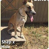 Adopt A Pet :: Echo - DeForest, WI
