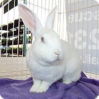 Adopt A Pet :: Cotton - Belton, TX