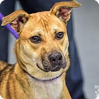 Adopt A Pet :: Mousie - Martinsville, IN