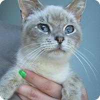 Adopt A Pet :: Winnifred - Menomonie, WI