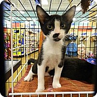 Adopt A Pet :: Junior - The Colony, TX