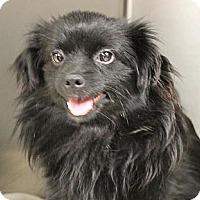Adopt A Pet :: *Zeva - PENDING - Westport, CT