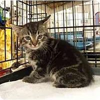 Adopt A Pet :: Sebastian - Frenchtown, NJ