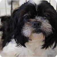 Adopt A Pet :: Lana - Toluca Lake, CA