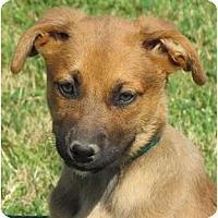 Adopt A Pet :: Berta - Providence, RI