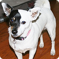 Adopt A Pet :: Camacazi - Johnson City, TX