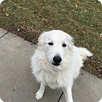 Adopt A Pet :: Bridgette - Bloomington, IL