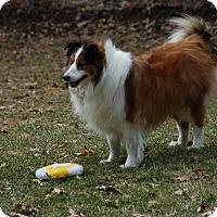 Adopt A Pet :: Sadi - Circle Pines, MN