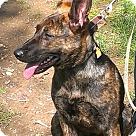 Adopt A Pet :: Hana 4242