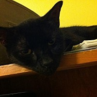Adopt A Pet :: Raffy - St. Cloud, FL