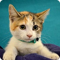 Adopt A Pet :: Taffy - Visalia, CA
