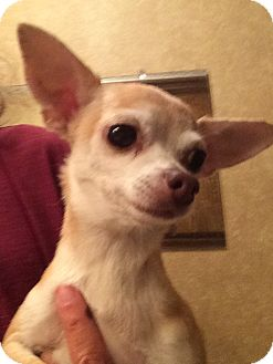 Dog Adoption Edmond Ok
