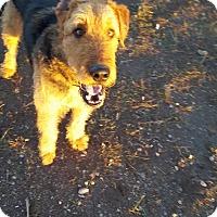 Adopt A Pet :: Fitz - Ogden, UT