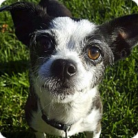 Adopt A Pet :: Chiquita - San Francisco, CA