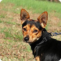Adopt A Pet :: Clyde~ meet me! - Glastonbury, CT