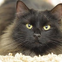 Adopt A Pet :: London - DFW Metroplex, TX