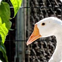 Adopt A Pet :: GG - Spokane, WA