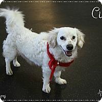 Adopt A Pet :: Curly - Rockwall, TX