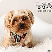 Adopt A Pet :: Max II - Omaha, NE