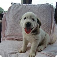 Adopt A Pet :: Roscoe - Huntsville, AL