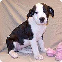 Adopt A Pet :: 16-d06-006 Gertie - Fayetteville, TN