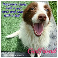 Adopt A Pet :: Girlfriend - Cary, NC