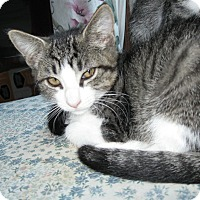 Adopt A Pet :: Cuddles - Smithfield, NC