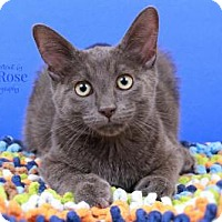 Adopt A Pet :: Max - Sterling Heights, MI